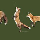 Playful Fox by newmindflow