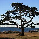Tree Sculpture - Georgetown Tasmania by Robyn Selem