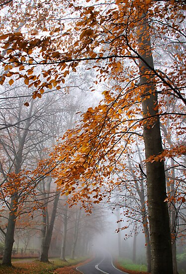 Into the Mist by Robyn Lakeman
