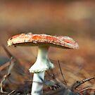 Mushroom by Sangeeta