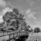 Gostrey Meadows ,Farnham ,Surrey by relayer51