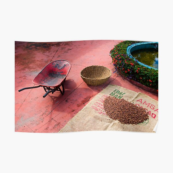 Drying Cacao Beans at a Chocolate Plantation Poster