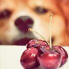 Cherry thief by Sangeeta