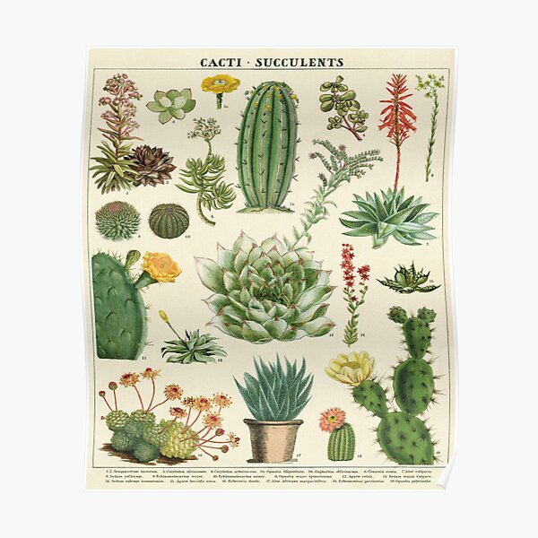 Succulents and Cacti Vintage Poster