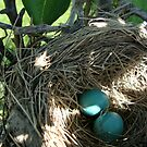 Dappled Robin's Egg Blue by emilycolors