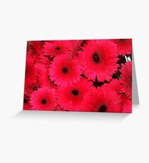 Pink Gerberas Greeting Card