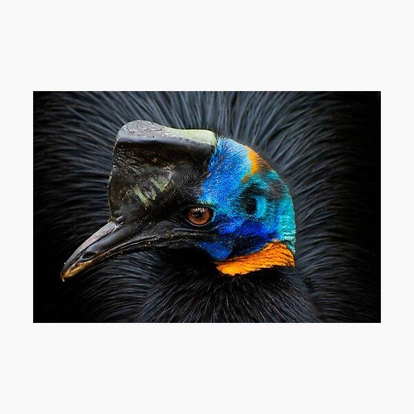 Cassowary Bird Photographic Print