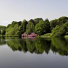 Rhododendrons Reflected by mmrich