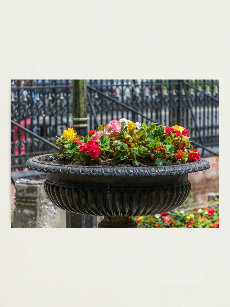 Alternate view of Beautiful flower display Photographic Print