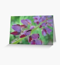 Lupin Haze Greeting Card