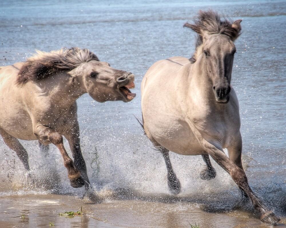 Chasing by Henri Ton