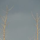 Sentinals Against The Dark Storm Clouds by MaeBelle