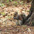 A Little Nutty by DebbieCHayes