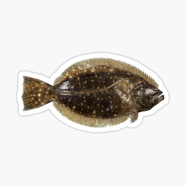 Flounder Stickers Redbubble Dive into the first season of spongebob squarepants, filled with waterlogged hilarity and nautical nonsense! redbubble