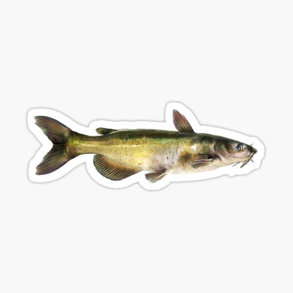 Channel Catfish Sticker