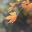 Autumn sunshine by Sangeeta