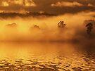 """""""Golden Waters"""" by debsphotos"""