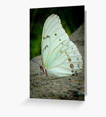 WHITE MORPHO (Morpho polyphemus)  Greeting Card