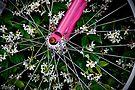 Flower Power by martinilogic