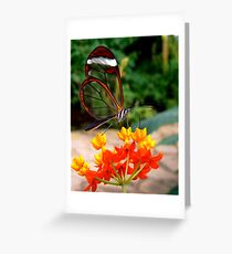 GLASSWING BUTTERFLY FEEDING ON NECTAR Greeting Card