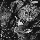 """Backyard Bunnies"" by Justine Walke"