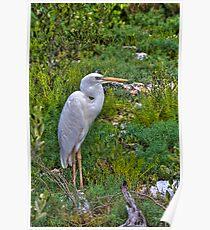 White Heron Poster