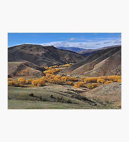 Golden Stream Photographic Print