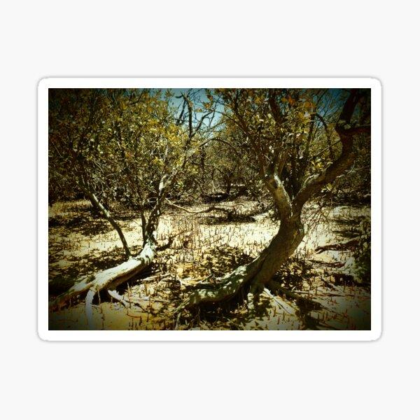 Mangrove trail Sticker
