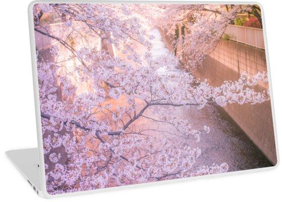 Sakura tree over Kanda Gawa river by Guillaume Marcotte