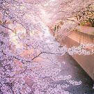 «Sakura árbol sobre el río Kanda Gawa» de Guillaume Marcotte