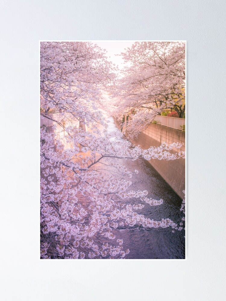 Alternate view of Sakura tree over Kanda Gawa river Poster