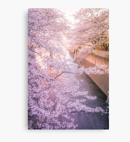 Sakura tree over Kanda Gawa river Canvas Print