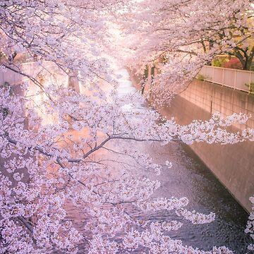 Sakura árbol sobre el río Kanda Gawa de TokyoLuv