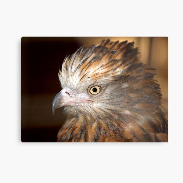 Raptor at Featherdale Wildlife Park Metal Print