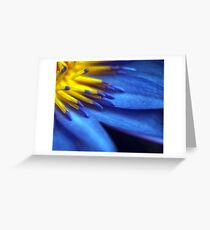 Waterlily Close-up Greeting Card