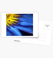 Waterlily Close-up Postcards