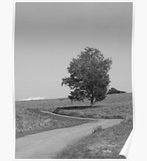 Tree on a hill Poster