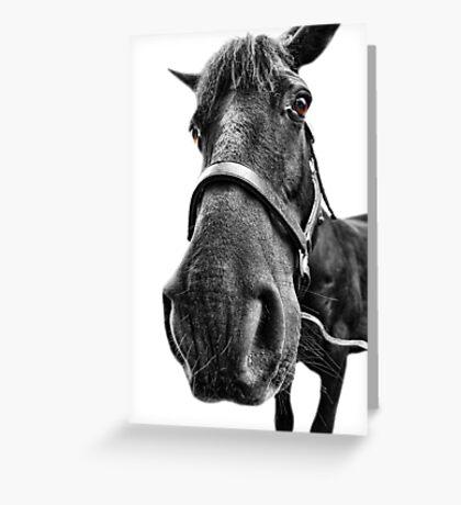 Me So Horsey! Greeting Card