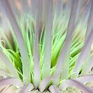 Sea anemone in Lankayan, Borneo by Kathy White