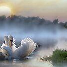 Misty Swan Lake von Morag Bates