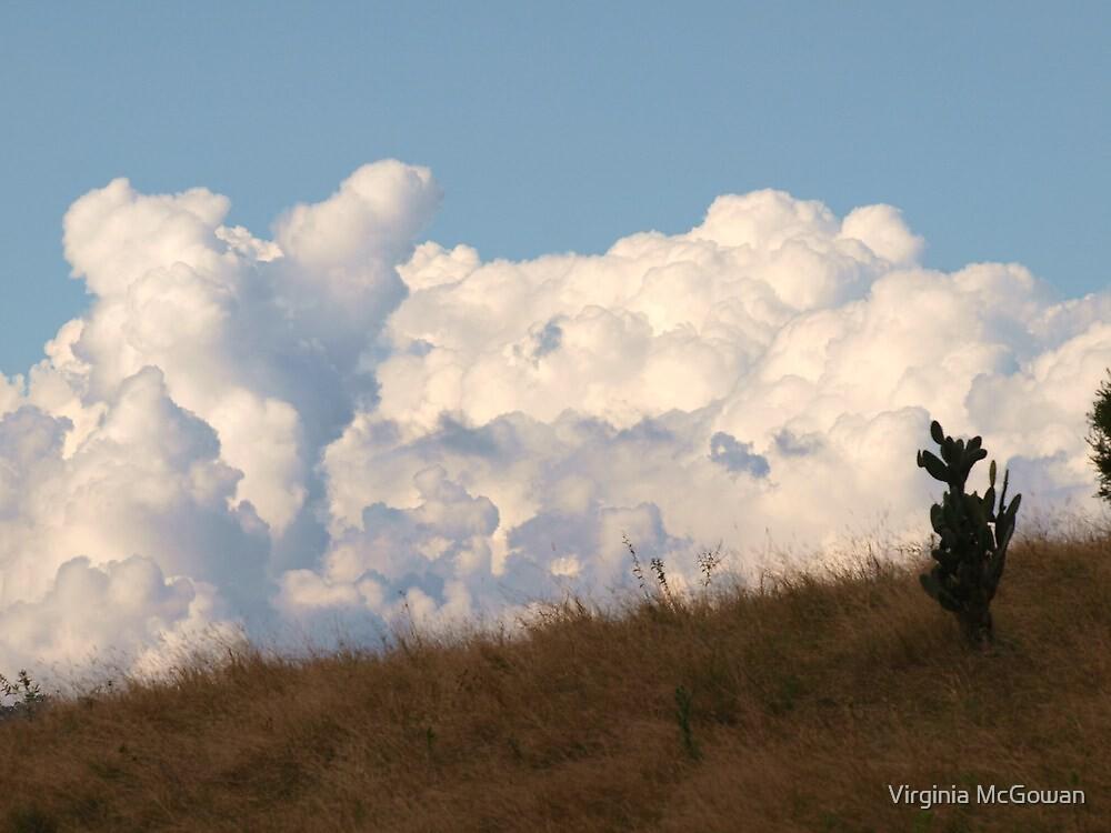 Just a bit of Fluff on the horizon, via Mt Barney by Virginia McGowan