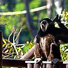 Lunch Time Yawn by miroslava