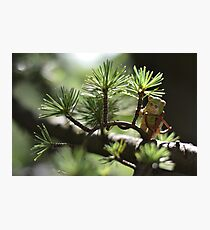 Forest Fred Photographic Print