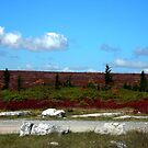 Dolly Sods by Fred Moskey