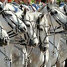 The Royal Greys by Alan Mattison