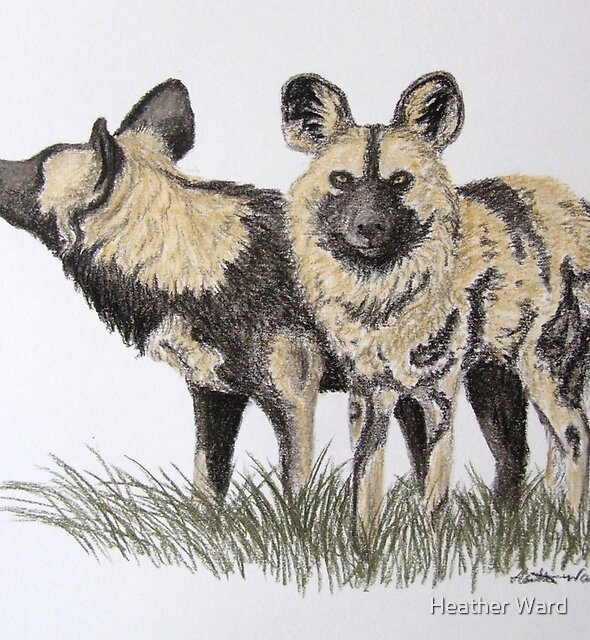 African Hunting Dogs - Drawing Day 2010 by Heather Ward