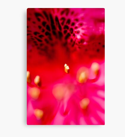Rhododendron detail Canvas Print
