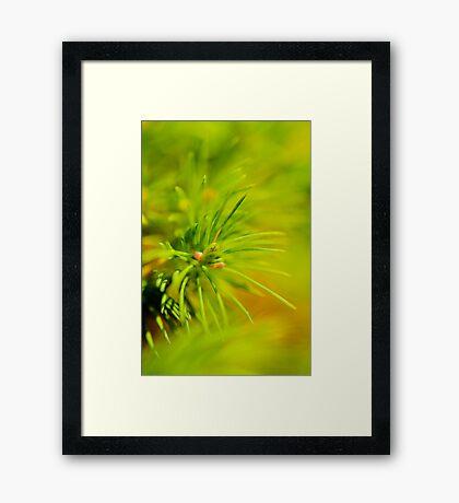 Pine Tree detail Framed Print