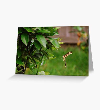 Butterfly in flight  Greeting Card