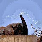 KEINE WAND ZU HOCH - AFRIKANISCHER ELEFANT - Loxodonta Africana von Magriet Meintjes